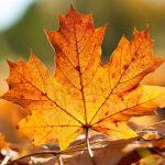 Offre L'automne à Prix Marina