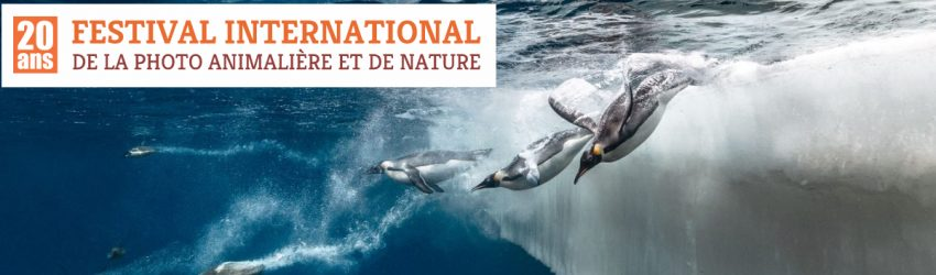 Festival Photo animalière et de nature à Montier-en-Der